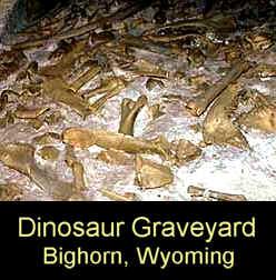 dino-graveyard
