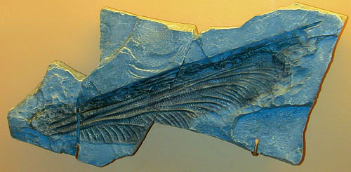 Fossilized Dragonfly Wing