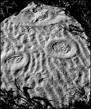Jellyfish Fossils