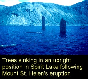 vertical-trees-mt-st-helens-spirit-lake