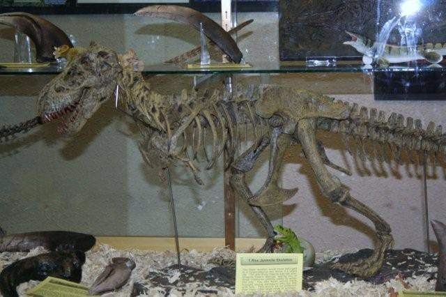 Dino Skeleton