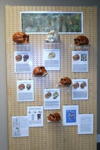 Missing Links display
